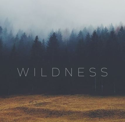 Image result for wildness